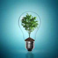 Consumo priorizado en los valores del cuidado verde
