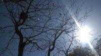 Miércoles infernal: se anuncian 40º de máxima y ráfagas de hasta 50 k/h